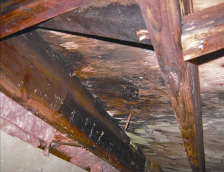 mold and rot in a Dayton crawl space